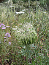 Photo: 017 Kukkia Jättiläisen haudan lähellä