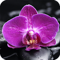 Orchid Live Wallpaper Plant icon