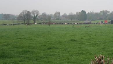 Photo: Sortie pour ces dames vaches ... à la queue leu leu.