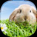 Rabbit Live Wallpaper icon