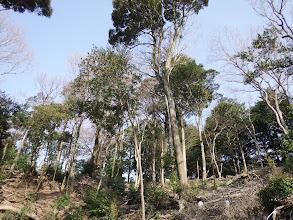 愛宕山への急斜面
