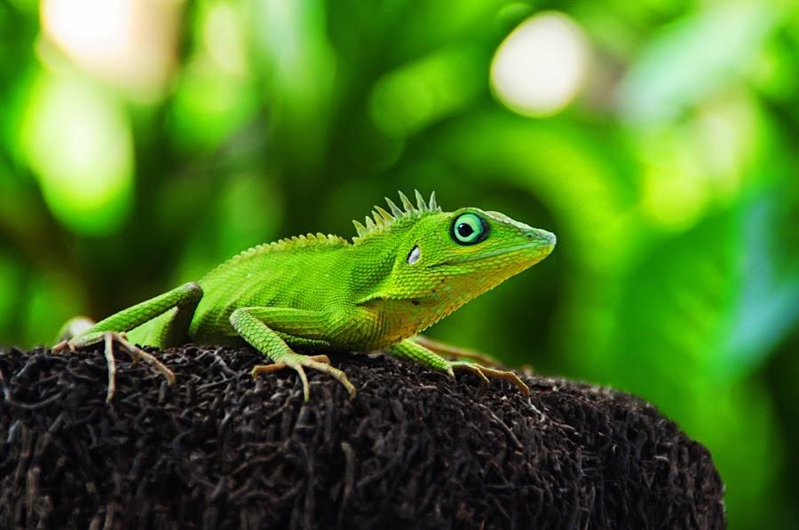 by Dik Doank - Animals Reptiles