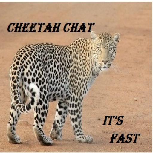 Cheetah Chat