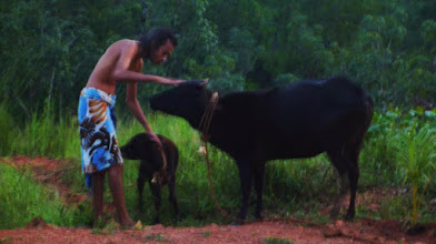 Photo: gaia ~ go swami ~ holy cow, mother of all gods