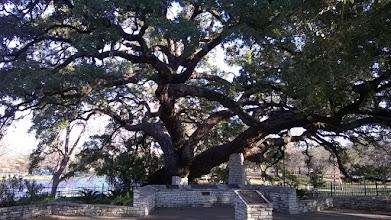 Photo: Founders Oak Landa Park New Braunfels