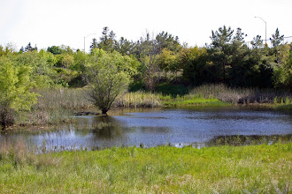 Photo: Toad Hollow (Core) Pond