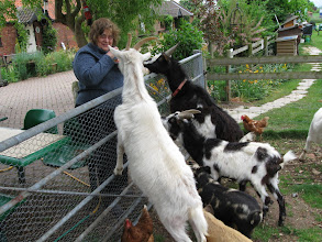 Photo: Barbara feeding goats and pigs at Waterfall Farms where we stayed.