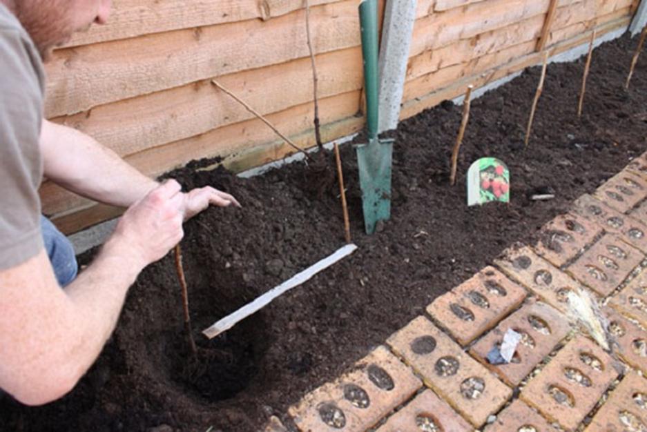 Подготовка места и почвы