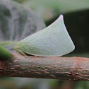 Green planthopper