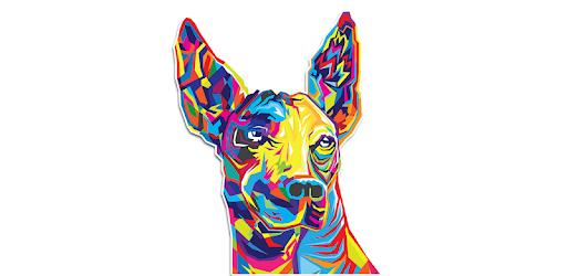 All the information about your team Club Tijuana Xoloitzcuintles de Caliente