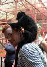Photo: Im Affen-Indoor-Spielplatz, wo sich die Kleinen austoben können und so spielerisch auf das Leben in der freien Natur vorbereitet werden.
