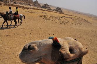 Photo: Jeanette's camel's head