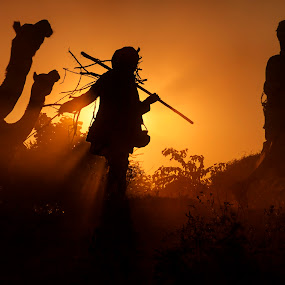 Walk Against Light by Jasminder Oberoi - People Street & Candids ( canon, pushkar fair, workshop, desert, travel diary, silhouette, rajasthan, incredible india, back light, travel, travelogue, golden light, light chasers, pushkar, photo tour, camel fair, canon photo tour, klik, india, jas fotography )