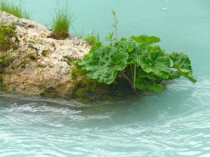 Photo: vegetazione acquatica