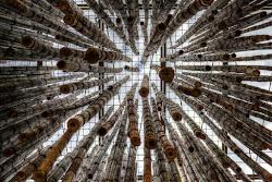 Pioggia di Bambù