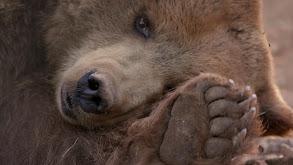 Grin and Bear It thumbnail