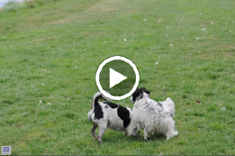 Video: Spike en Bobby.