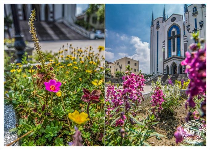 鳳山長老基督教堂多種花草
