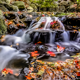 by Keith Sutherland - Nature Up Close Leaves & Grasses ( canada, leaves, stream, flowing water, british columbia, long exposure, water fall )