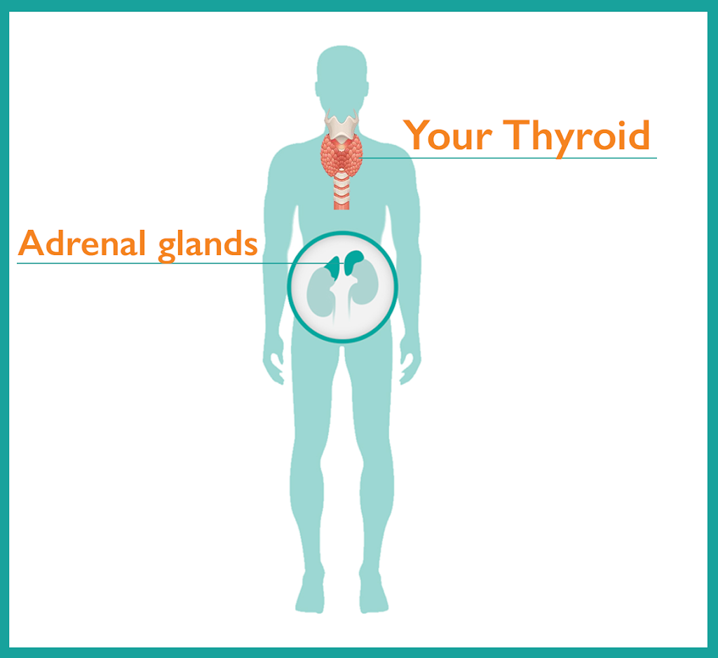 Adrenal Glands and Thyroid