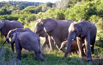 Photo: The smallest, under its mother on the far right, is less than one month old.