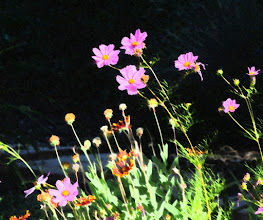 Photo: Smudge stick (3/4/7) - cosmos and gaillardia