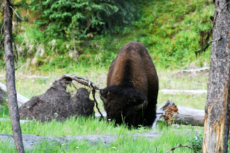 Photo: After that buffalo left, we saw somebody at a picnic area!