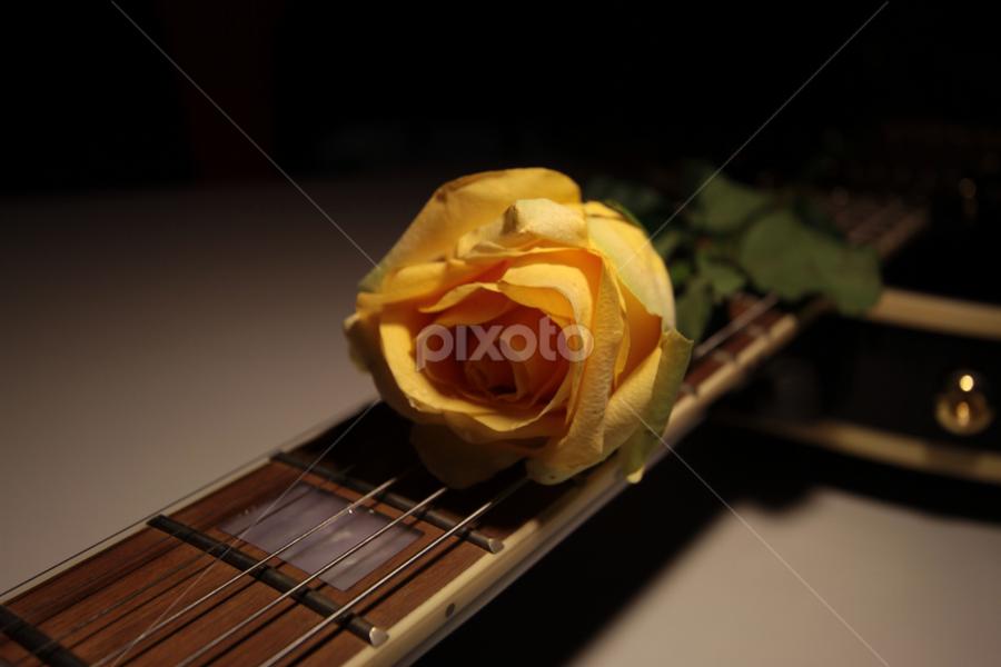 Rose Rhythm by Irwan Yusoff - Artistic Objects Other Objects