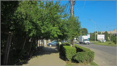 Photo: Corcodusi (Prunus cerasifera) - din Piata Romana, zona fostei fabrici de bere - 2017.07.18