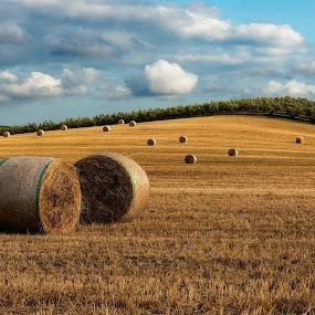 just cut by Lorenzo Moggi - Landscapes Prairies, Meadows & Fields