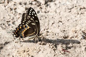 Photo: butterflies