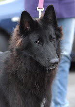 Photo: World Dog Show 2011