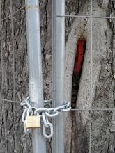 Photo: Baumschutz auf gut kölsch