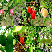 Fruit Garden Ideas