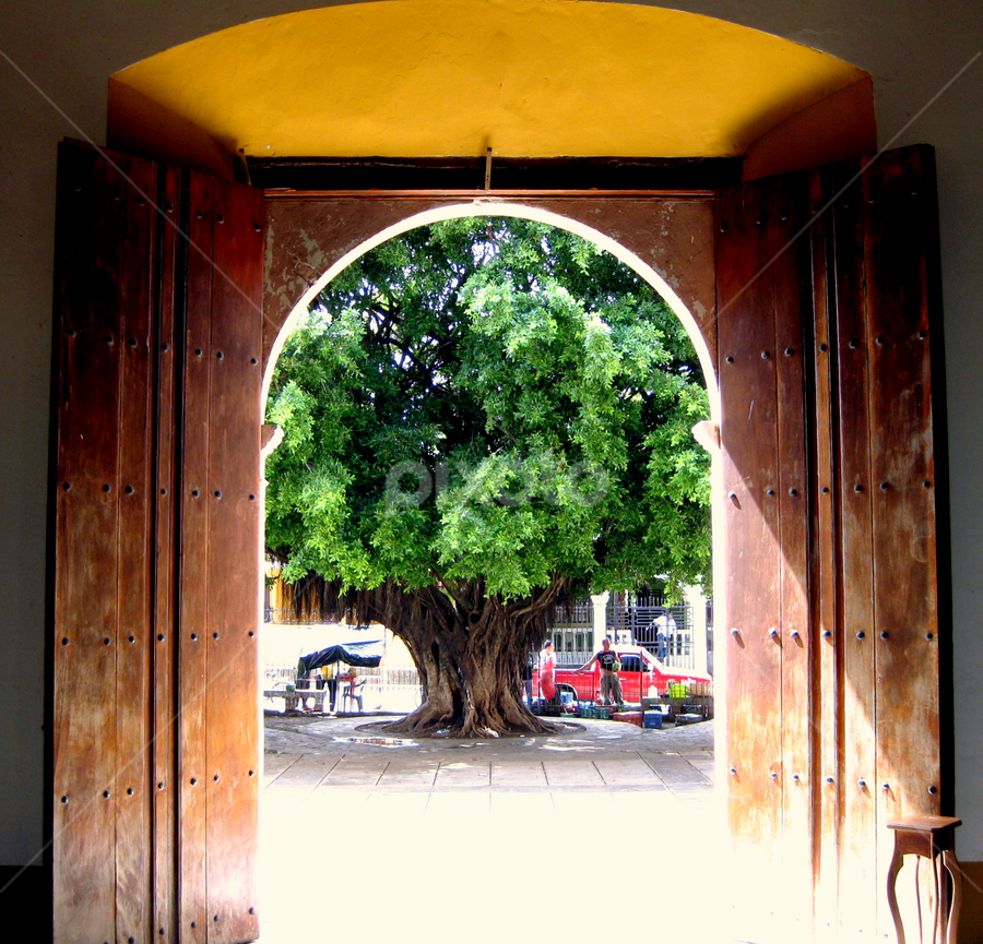 Church Tree by Jacob Uriel - Buildings & Architecture Other Interior ( tree, church, door, nicaragua, sunlight )