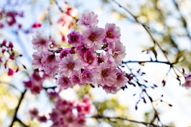 Photo: Blossoms.
