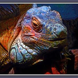 Portrait of a lizard... by Morris Kleyman - Digital Art Animals ( animals, colors, portraits, digital,  )