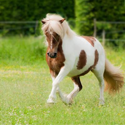 Pony Horse Live Wallpaper - screenshot