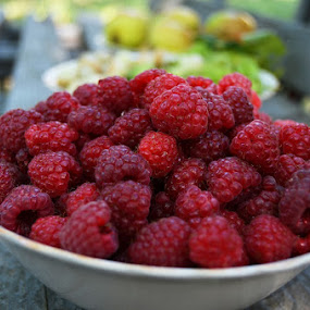 Fresh from the garden by Alina Vicu - Novices Only Objects & Still Life ( fresh, raspberry, fruits, garden, raspberries )