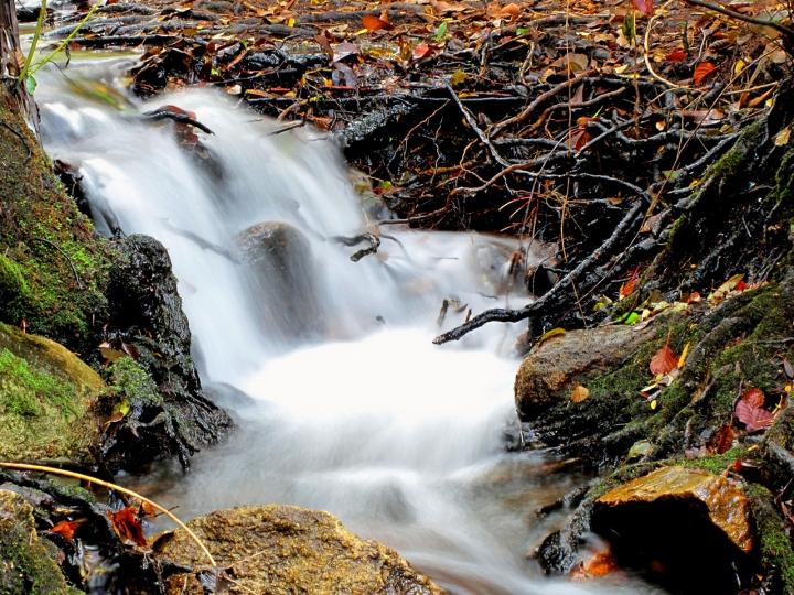 Autumn falls di Silvio Lorrai