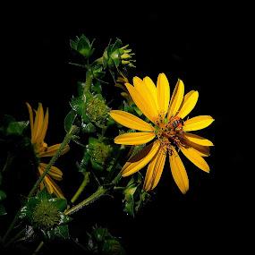by Joaquim Machado - Nature Up Close Flowers - 2011-2013