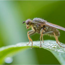Wet... by Blaž Ocvirk - Animals Insects & Spiders