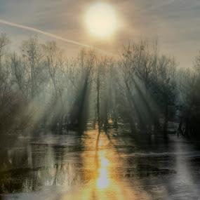 Foggy sunrise by Vanja Vidaković - Landscapes Sunsets & Sunrises ( foggy, baranja, croatia, river drava, sunrise )
