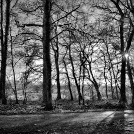 A Winter Day Is Ending by Marco Bertamé - Black & White Landscapes