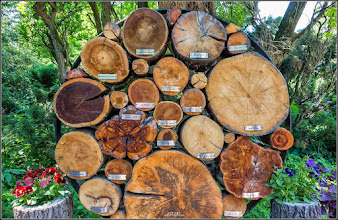 Photo: Arboretumul Simeria - sursa Facebook, Zoltan Szucs - 2017.06.08  https://www.facebook.com/photo.php?fbid=10211504584547894&set=np.1496904717627434.100000533013542&type=3&theater&notif_t=notify_me&notif_id=1496904717627434