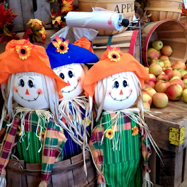Halloween at the Farmers' Market by Leah Zisserson - Public Holidays Halloween ( market, halloween, virginia, apples, scarecrow, colorful,  )