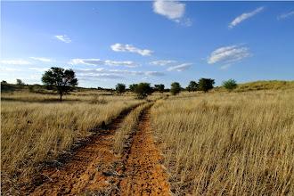 Photo: a spasso per il Kalahari