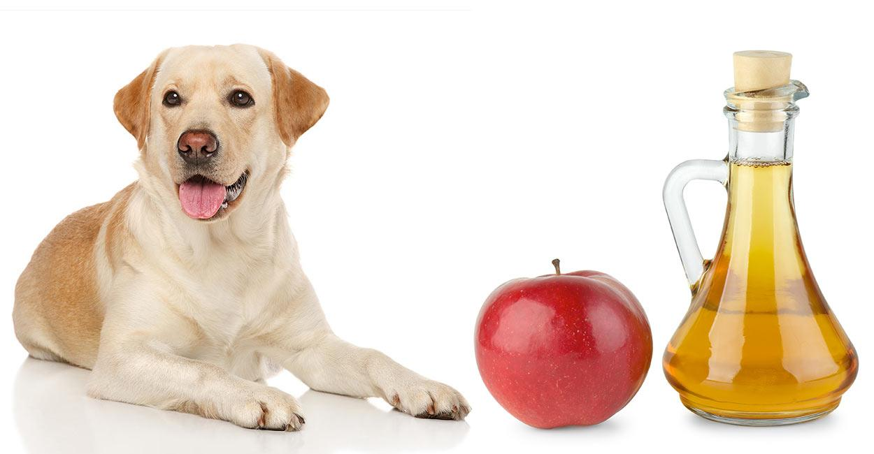 Homemade remedies for dogs - apple cider for dogs