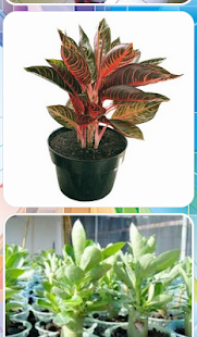Decorative Plants - náhled