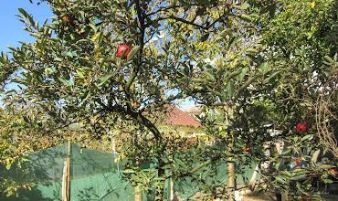 Photo: Turda - Str. Salinelor, Nr.15, vedere in curtea vecinului  - 2018.10.15